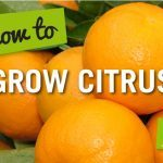 How to Guides Web Tiles-Citrus3