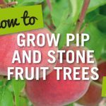 how to grow pip and stone fruit trees
