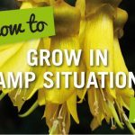 how to grow in damp situations