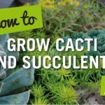 how to grow cacti and succulents