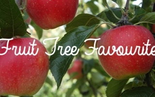 Fruit Tree Favourites that Our Family Enjoys
