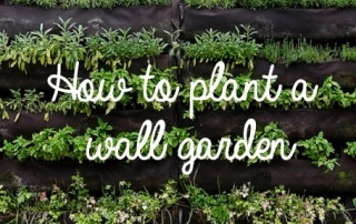 How to Plant a Wall Garden