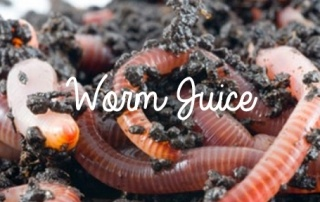 Worm Juice From Your Worm Farm