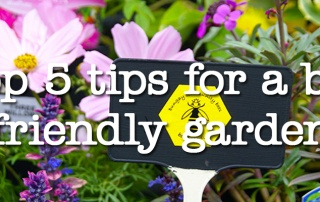 Top 5 Tips for a Bee Friendly Backyard
