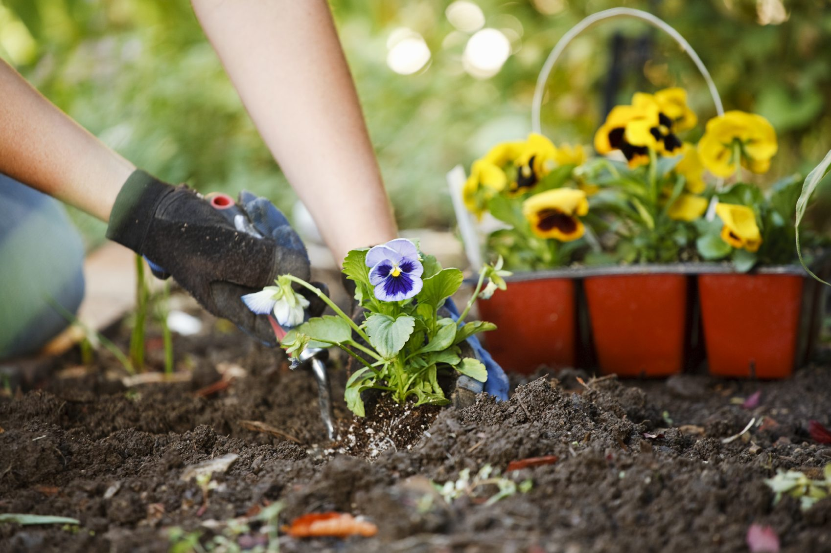 Spruce up your garden for summer palmers garden centre for Garden topsoil