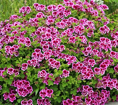 Annuals Vs Perennials Whats The Difference Palmers Garden Centre