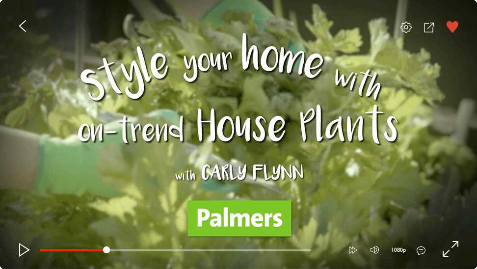 video-player-plamers-houseplants
