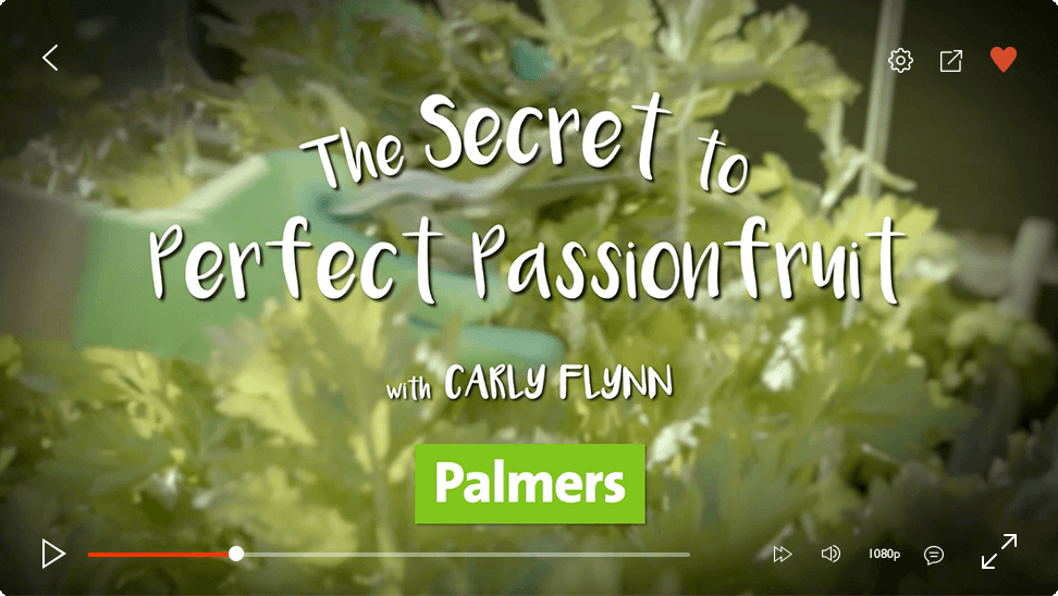 video-player-plamers-passionfruit