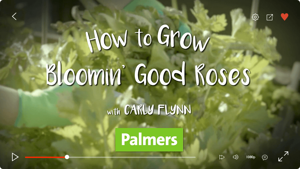 video-player-plamers-roses
