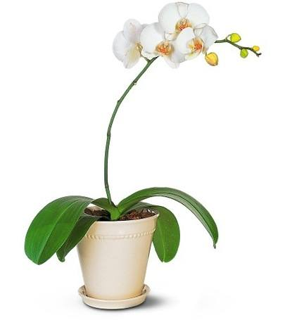 caring for houseplants