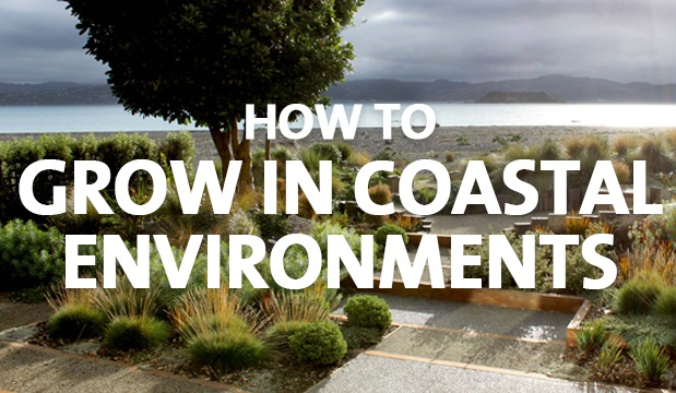 How to Grow in Coastal Environments