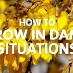 grow in damp situations