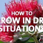 How to grow in dry soil