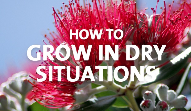 How to Grow in Dry Situations