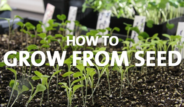 grow from seed