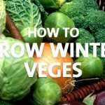 Winter veges