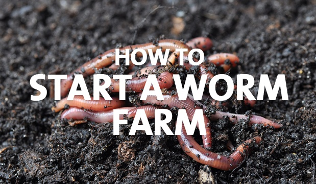 How to Start a Worm Farm - Palmers Garden Centre