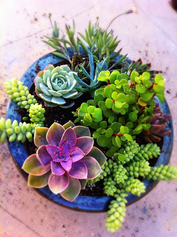 How to grow cacti and succulents palmers garden centre for Easy care plants for pots