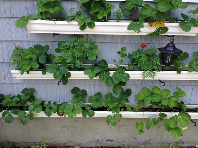 Short On Space Plant Your Strawberries Here Palmers