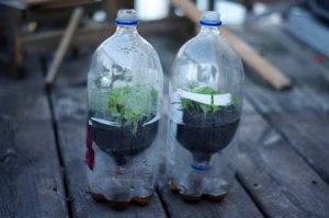 Mini greenhouse - 12 top home gardening hacks