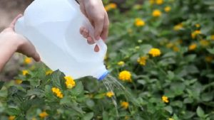 Water bottle watering can - 12 top home hacks for your garden