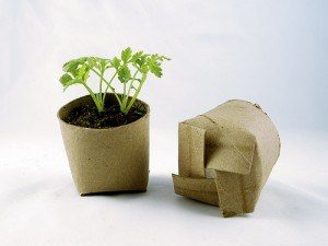Toilet paper roll pots - 12 home hacks for your garden