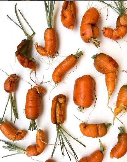 Crop failures - carrots