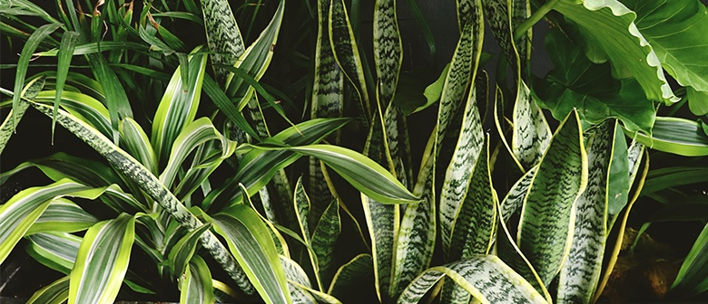 How To Care For Your Houseplant In Winter Palmers Garden Centre,Upholstered Club Chair And Ottoman