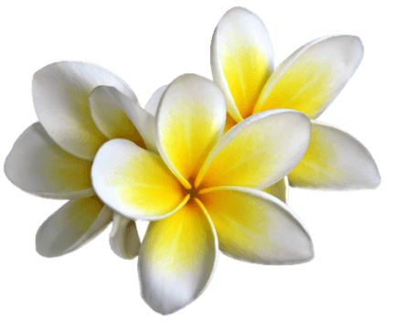 growing frangipani