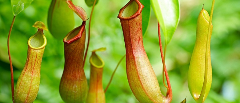 A Guide to Carnivorous Plants - Palmers Garden Centre