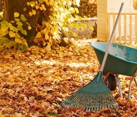 Your Autumn Garden Tasks