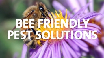 Bee Friendly Pest Solutions