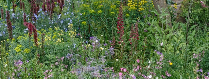 Top Trends from the Chelsea Flower Show