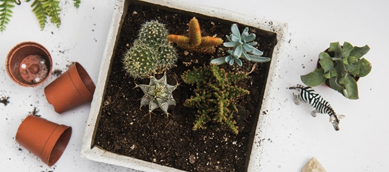 Cool Summer Style with Cacti and Succulents