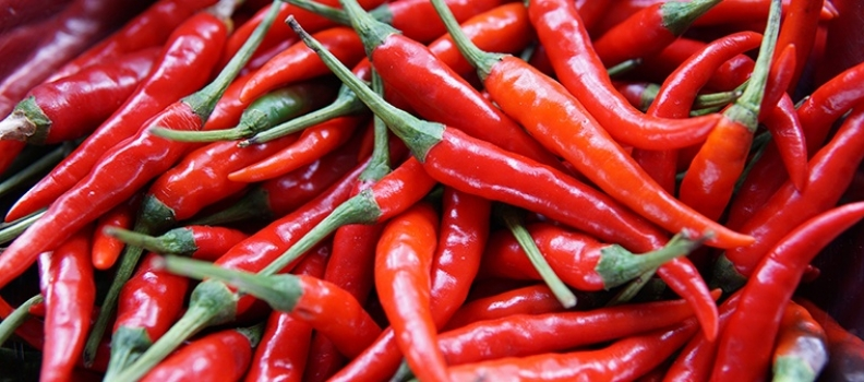 Spicy Food Fanatics: Homegrown chillies