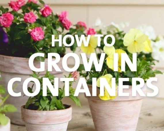 How to Grow in Containers