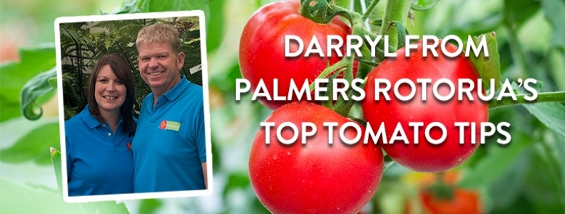 Ask a Palmers Expert: Darryl's top tomato tips