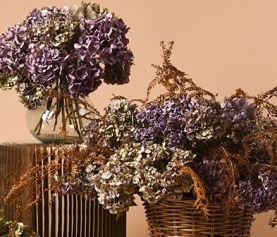 A Guide to Drying Flowers