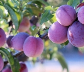 Grow Your Own Orchard