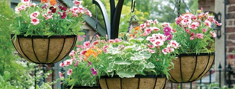 Create colourful spring hanging baskets palmers garden centre create colourful spring hanging baskets mightylinksfo