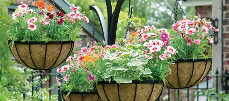 Create Colourful Spring Hanging Baskets