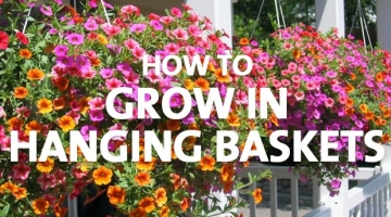 How to Grow in Hanging Baskets