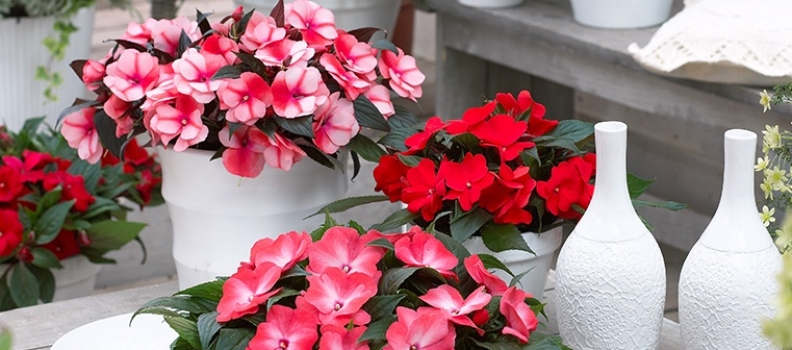 Annuals you can Grow Indoors