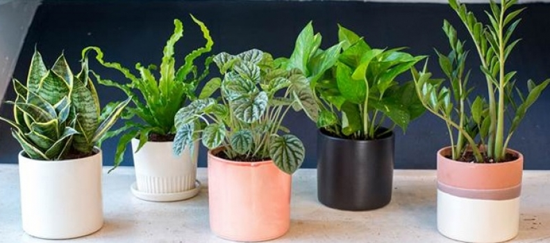 How to Re-Pot Houseplants