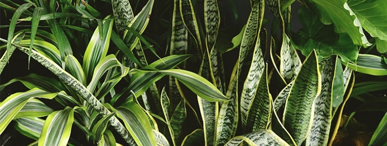 How to Care for your Houseplant in Winter