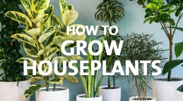 How to Grow Houseplants