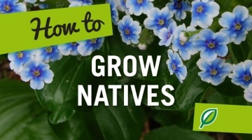 How to Grow Natives