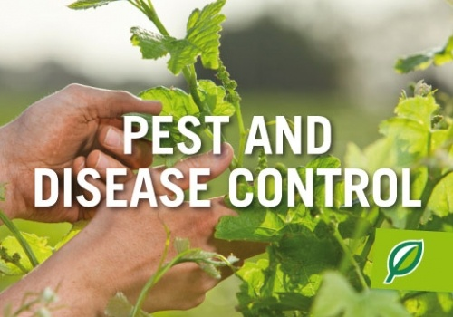 Pest and Disease Control