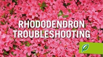 Rhododendrons Troubleshooting