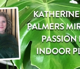 Ask a Palmers Expert: Katherine's passion for indoor plants